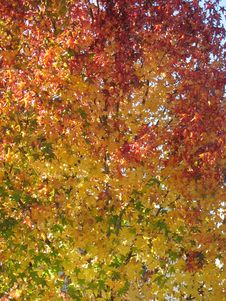 Autumns Here Stock Photography