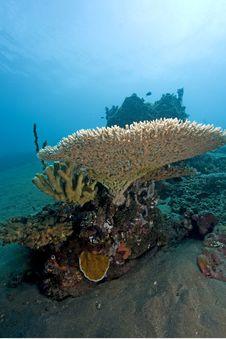 Free Dive Bali Royalty Free Stock Image - 3976846