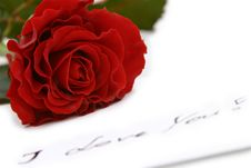 Free Beautiful Red Rose Royalty Free Stock Images - 3978899