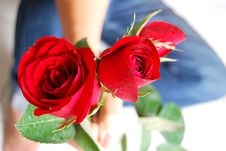 Free Rose Flower Stock Photography - 3978932