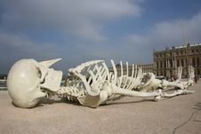 Free Skeleton And Castle Stock Image - 3979281