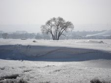 Free Lonely Cold Tree Stock Image - 3979401