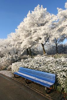 Bench In The Park In Winter Stock Image