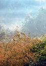 Free Fog Stock Image - 3988251