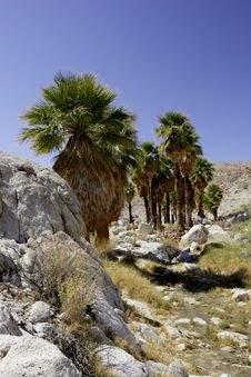 Free Palm Oasis Royalty Free Stock Photography - 3980237
