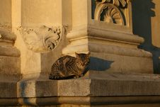 Free Cat On A Classic Monument Royalty Free Stock Image - 3980796