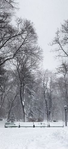 Free Snowstorm In The Park Stock Photography - 3980832