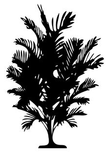 Free Detailed Palm Tree Royalty Free Stock Images - 3981269