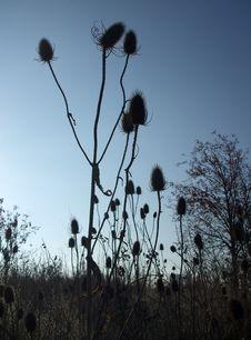Free Spiky Plants At Dusk Stock Image - 3981591