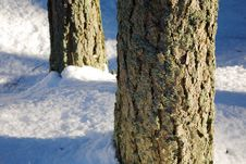 Free Pine Trunks Detail Royalty Free Stock Image - 3982716