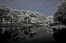 Free Infrared Photo – Tree, Landscape And Lake Royalty Free Stock Photography - 3984067