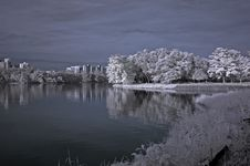 Free Infrared Photo – Tree, Landscapes And Lake Stock Images - 3984074