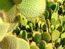Free Cactus Stock Photo - 3984820