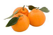 Free Three Hallabongs (Korean Orange) With Green Leaves Royalty Free Stock Images - 3984959