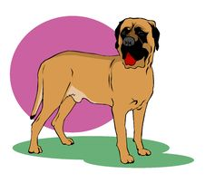 Free Mastiff Dog Stock Photography - 3985322