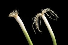 Free Two Onions, Black Background Royalty Free Stock Images - 3985859