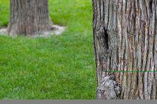 Free Trees Royalty Free Stock Image - 3986306