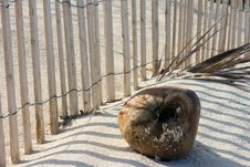 Free Coconut In The Sand Royalty Free Stock Photos - 3986318
