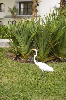 White Crane In Courtyard Stock Photo
