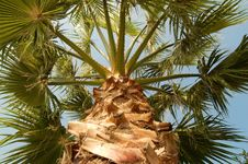 Free Palm Tree Stock Photo - 3987290