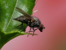 Free Urinate Fly Stock Photography - 3987682