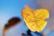 Free Autumn Leaf Stock Photo - 3987800