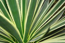 Free Agave Leafs Background Stock Photography - 3988122