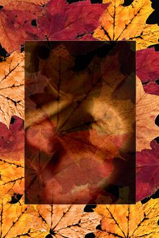 Free Autumn Leaves Design Royalty Free Stock Image - 3988986