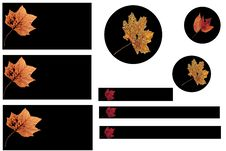 Free Autumn Leaves Buttons Royalty Free Stock Photography - 3988997