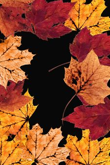 Free Autumn Leaves Border Royalty Free Stock Images - 3988999