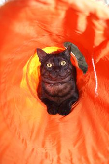 Free Black Cat In An Orange Tunnel Stock Images - 3989284