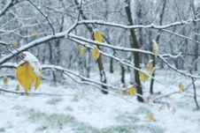 Free Cold Season Royalty Free Stock Image - 3989296