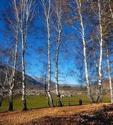 Free Autumn Scene Stock Image - 3989991