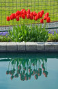 Free Red Spring Tulips Reflection Stock Images - 39808704