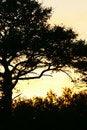 Free African Sunrise Stock Image - 3991691