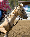Free Palomino Barrel Racer Royalty Free Stock Photography - 3994077