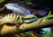 Free Lizard Royalty Free Stock Images - 3990169