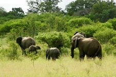 Free African Elephants Royalty Free Stock Photos - 3990958