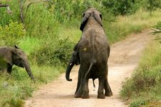 Free African Elephants Royalty Free Stock Photography - 3990977