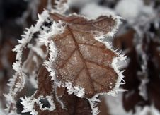 Free Hoarfrost Royalty Free Stock Image - 3991456
