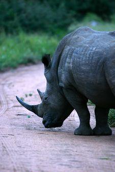 Free White Rhinoeros Stock Image - 3991711
