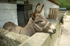 Free Donkey Stock Photos - 3992233