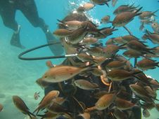 Free Hand Feeding Fish Stock Image - 3992861