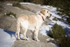 Free Dog On A Rock Royalty Free Stock Photo - 3993075