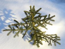 Free Small Spruce Tree In Snow Stock Photo - 3993810