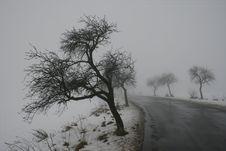 Free Winter Tree Stock Photography - 3994172