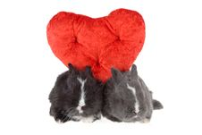 Free Two Cute Baby Rabbits With Red Hearts Royalty Free Stock Image - 3995276