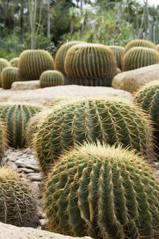 Free Group Of Cactuses Royalty Free Stock Photography - 3995347