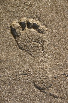 Free Footprint On Sand Stock Photography - 3995502