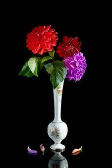 Free Three Red Dahlias. Royalty Free Stock Photo - 3995905
